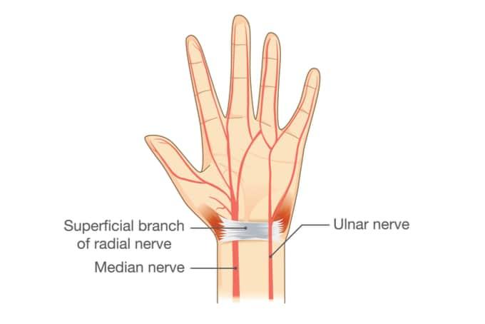 ulnar nerve on wrist