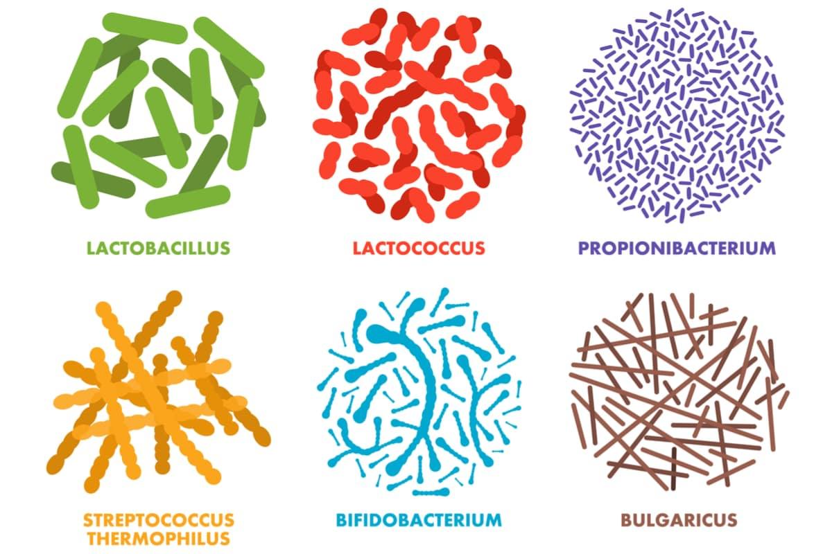 probiotics for bad breath