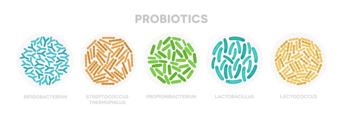 probiotics in gut health