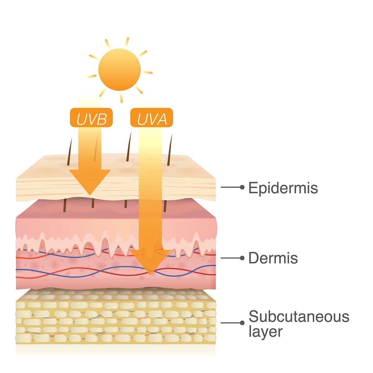 illustration of uv rays on skin