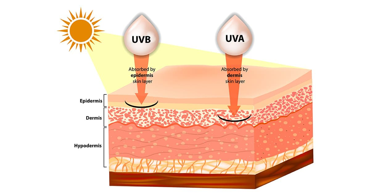 illustration of uva and uvb penetrating into skin