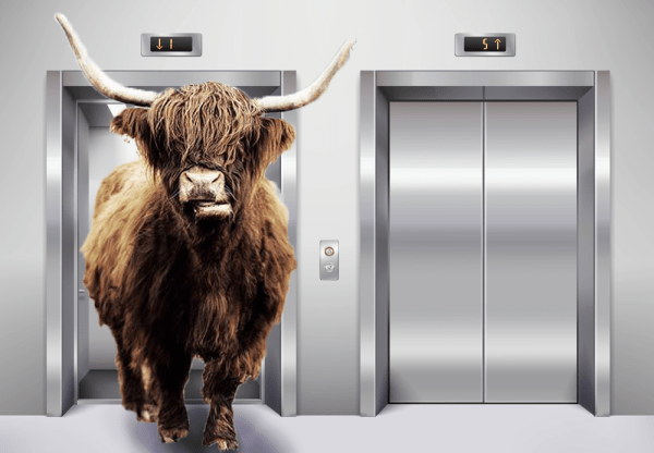 Cow in Lift