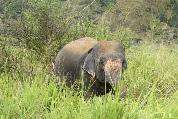 Ed Hunter Dragons' Den Elephant