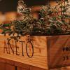 Aneto Table