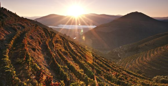 Why is the Douro such a special wine region?