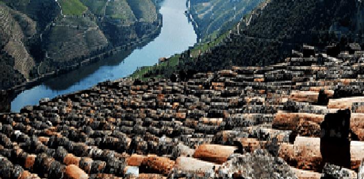 Four Days Douro