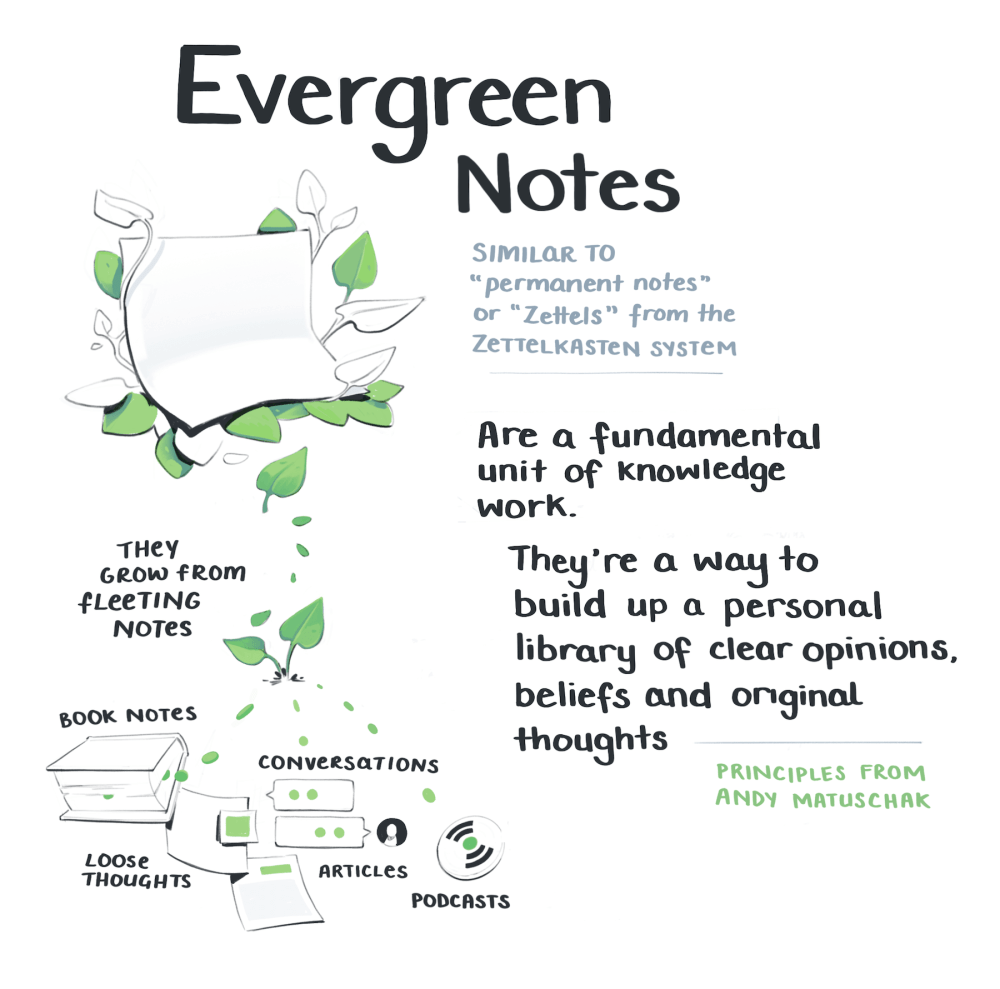 Illustration of evergreen notes emerging from fleeting notes you take from books, conversations, articles, or podcasts
