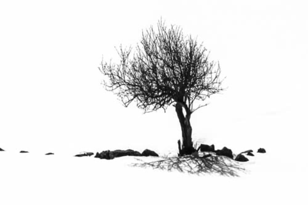 L'arbre sous la neige  - Catherine  Bisiaux