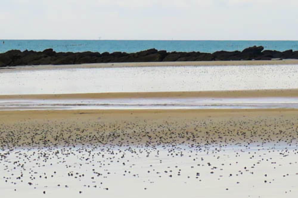 La plage de l'Ile  - Catherine  Bisiaux
