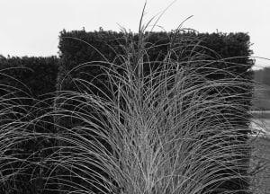 Domaine des étangs de Massignac de Michel Tréhet