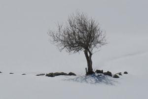 L'arbre sous la neige  de Catherine  Bisiaux