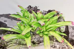 Bromelias - Saco do Mamangua de Mathilde Wolff