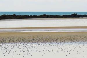 La plage de l'Ile  de Catherine  Bisiaux