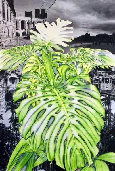 Acalypha - Ilha Grande - Mathilde Wolff