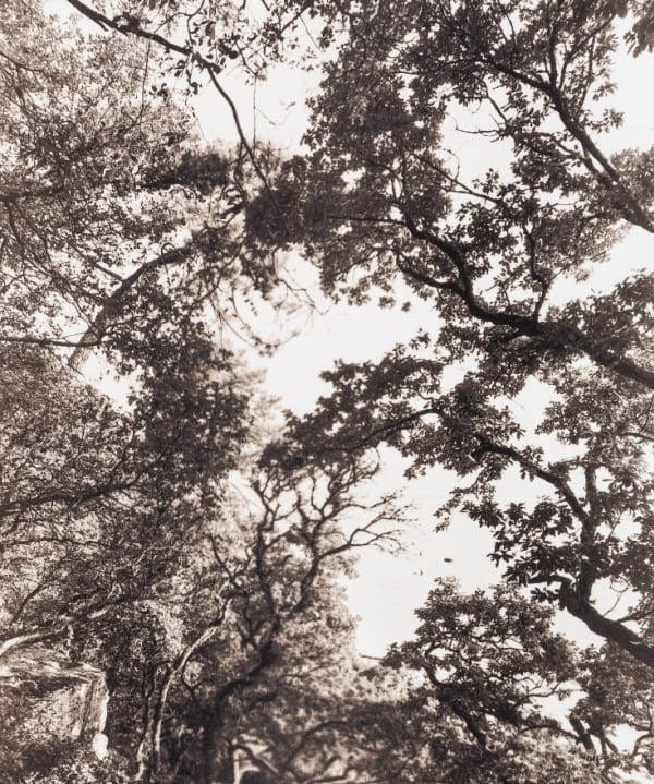 Prise de vue de Noirmoutier  - Tirage platine palladium