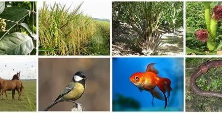 Klasifikasi Makhluk Hidup dan Tata Nama Binomialnya