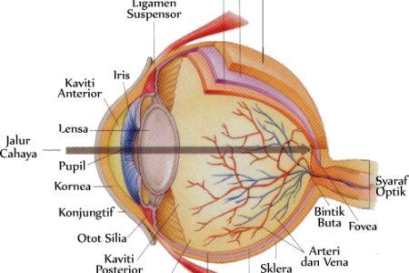 Mata sebagai Salah Satu Sistem Indra