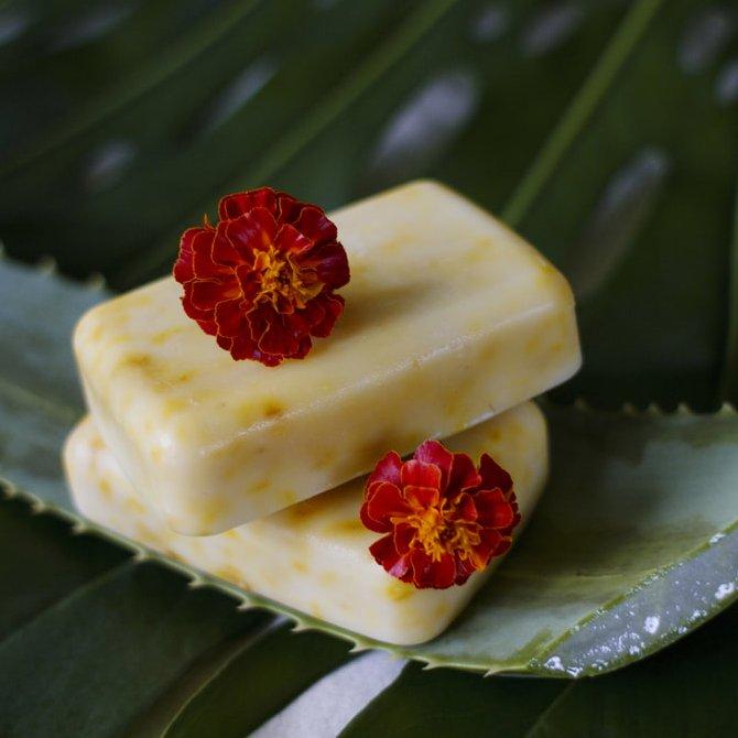 Shampoo Bar - Coconut and Aloe Vera
