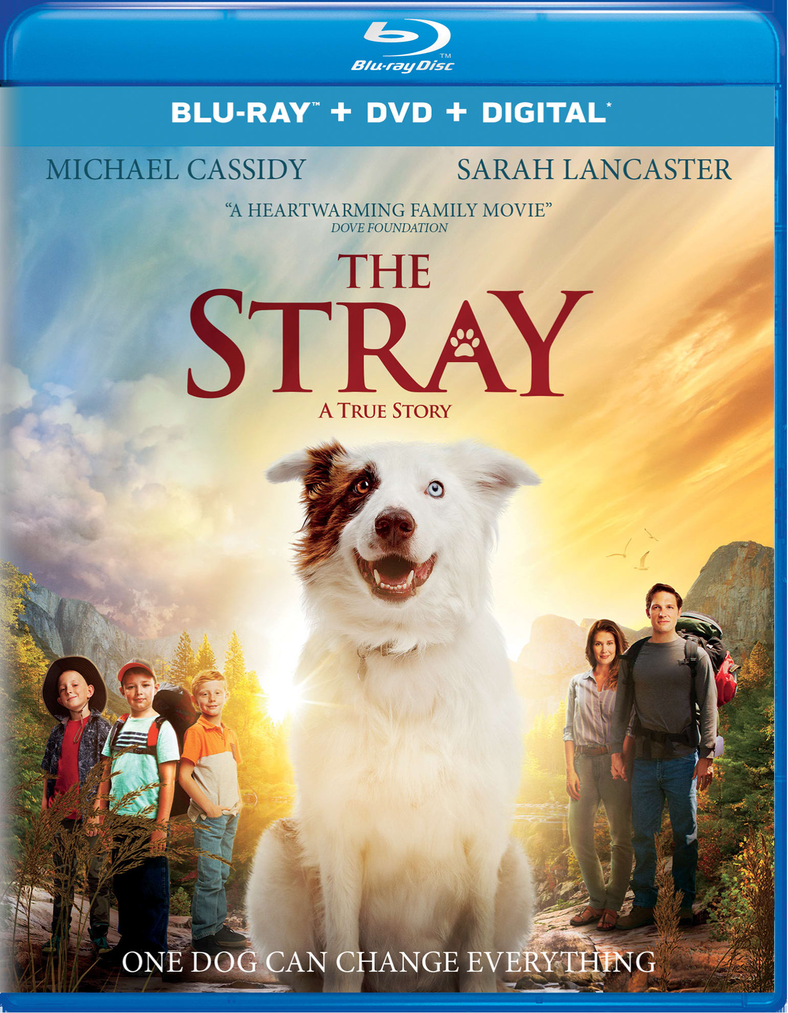The Stray (DVD + Digital) [Blu-ray]