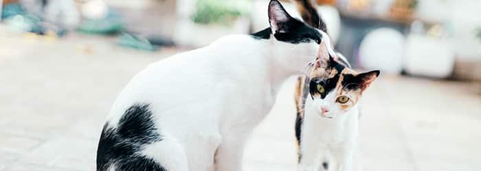 Så hittar du bästa kattförsäkringen