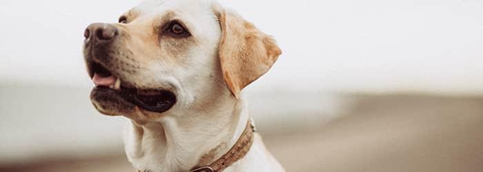 Jämför hundförsäkringar