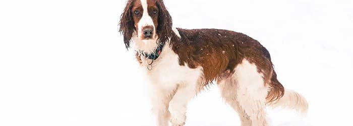 Vad kostar en hundförsäkring?