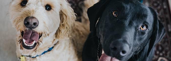 Billig hundförsäkring