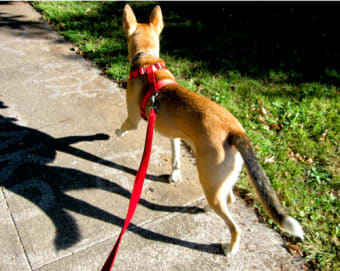 Types of Dog Harness