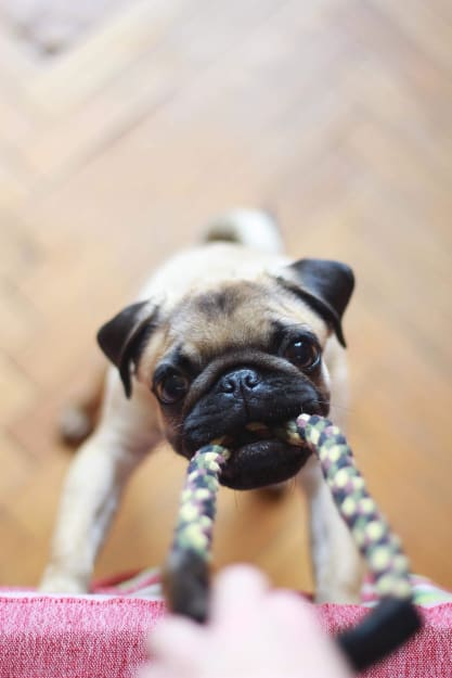 types of dog toys