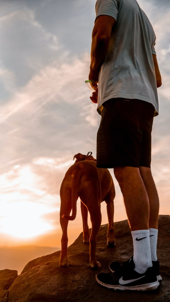 How long should you walk your dog