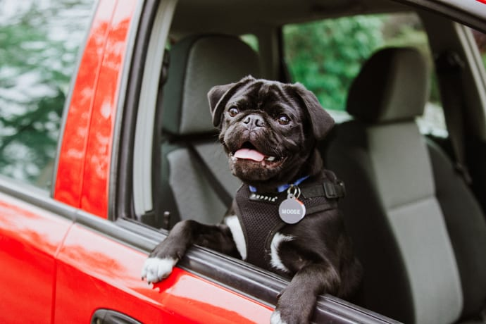 Bring your dog on a Road trip