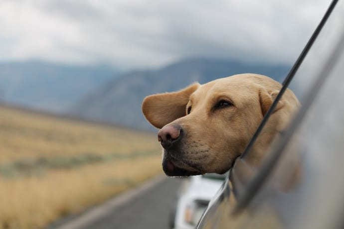 Traveling the World With Your Dog
