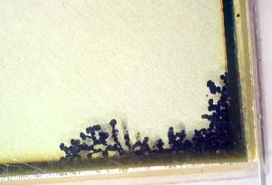 Black spots in LCD
