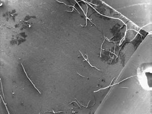 Micrograph of foil, lacks cracks
