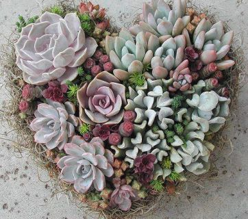 Succulents heart