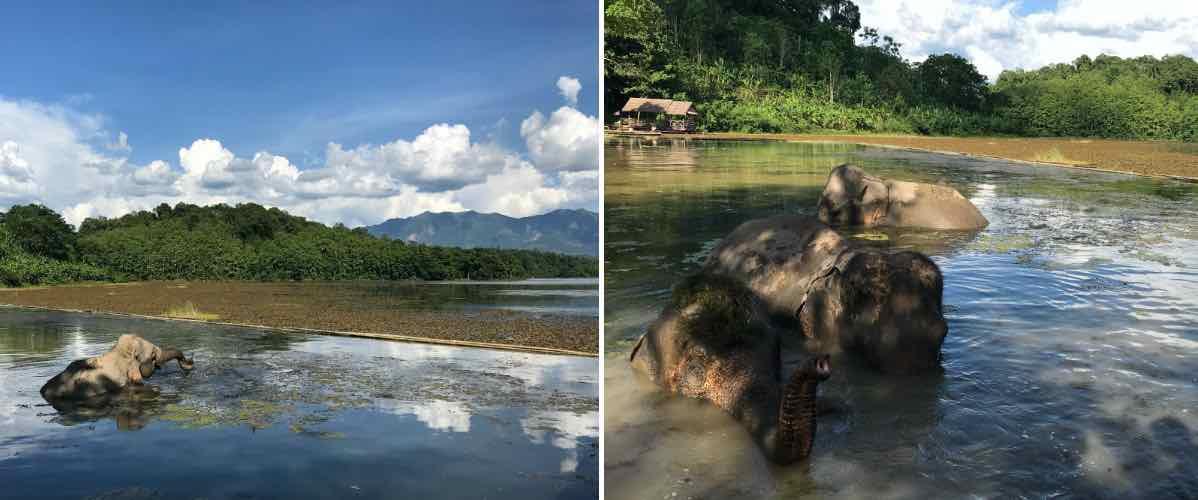 la baignade des éléphants