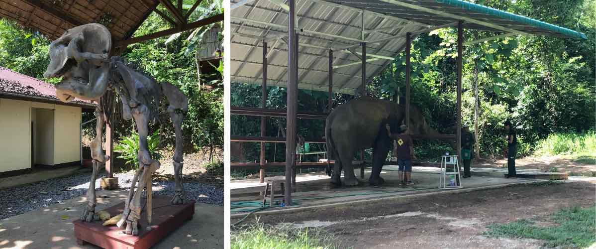 hôpital des éléphants au ECC