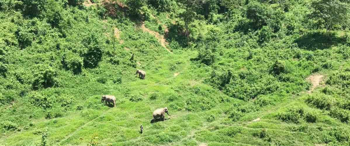 réserve des éléphants