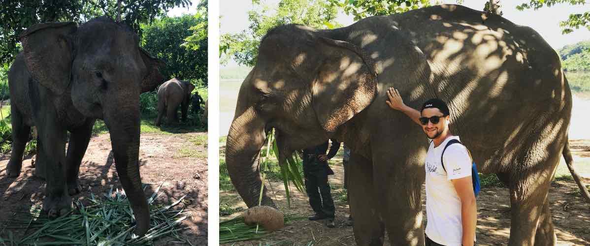voir et toucher des éléphants au laos