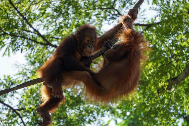 visiter le zoo de singapour