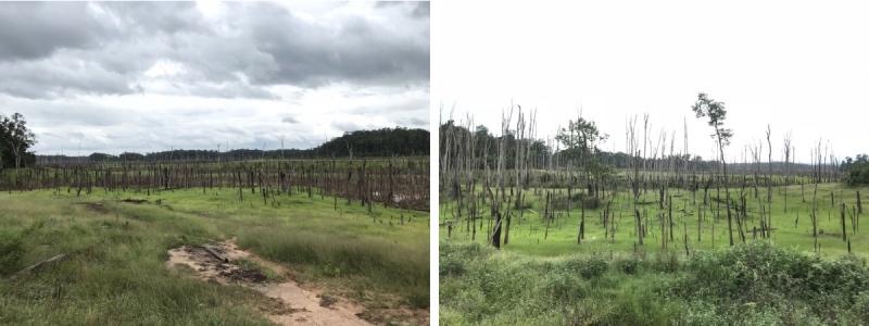arbres morts Thakhek loop