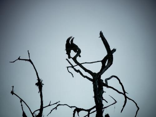 oiseau safari parc national Arusha en Tanzanie