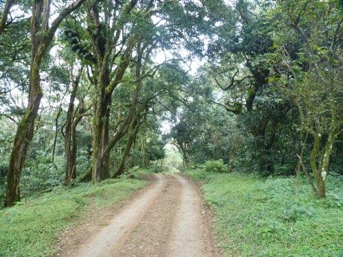 trek Parc National d'Arusha