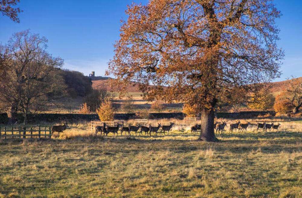 Bradgate Park in Leicester 18