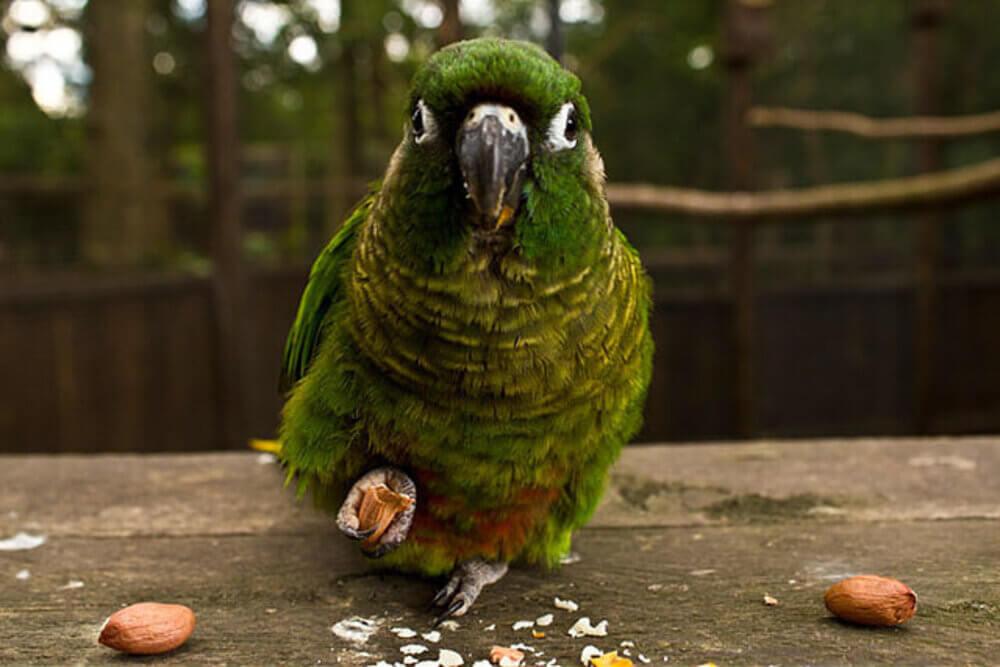 Tropical Birdland Leicester 1 1