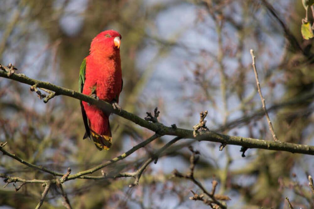 Tropical Birdland Leicester 4 1