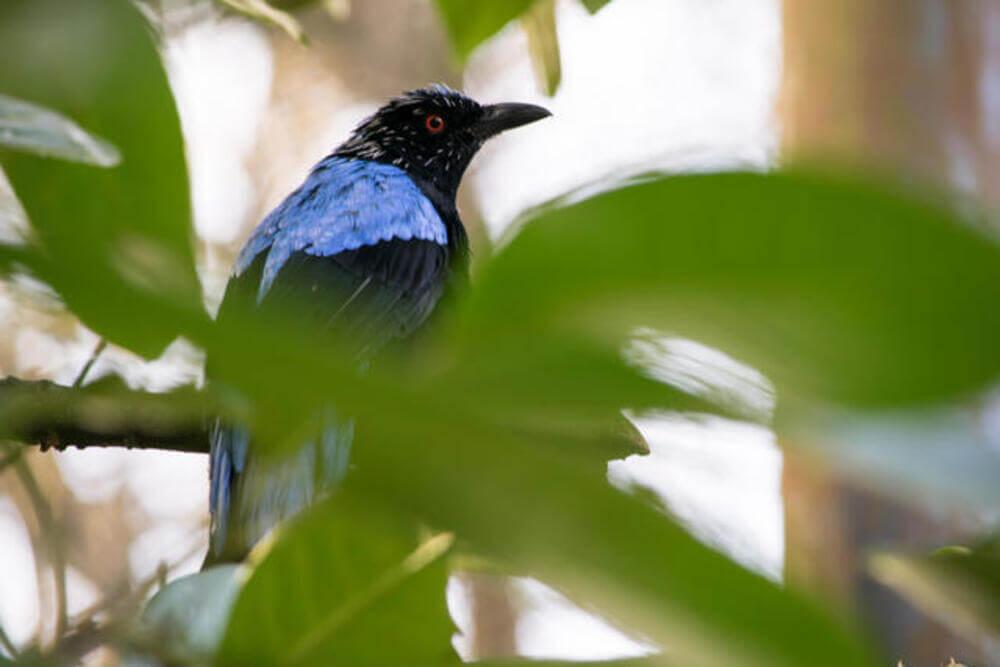 Tropical Birdland Leicester 3 1