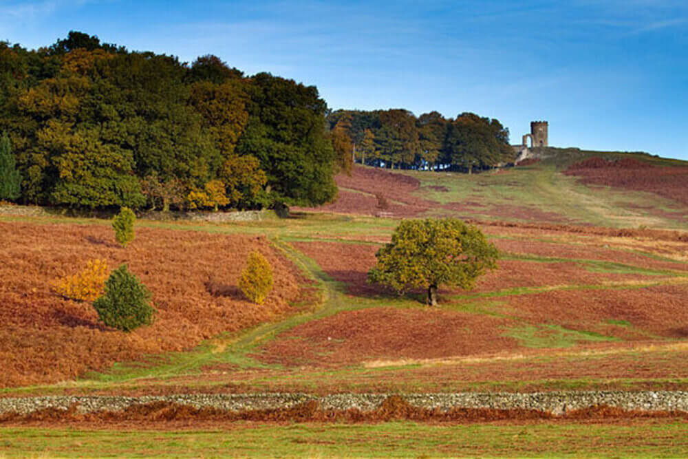 Bradgate Park in Leicester 2