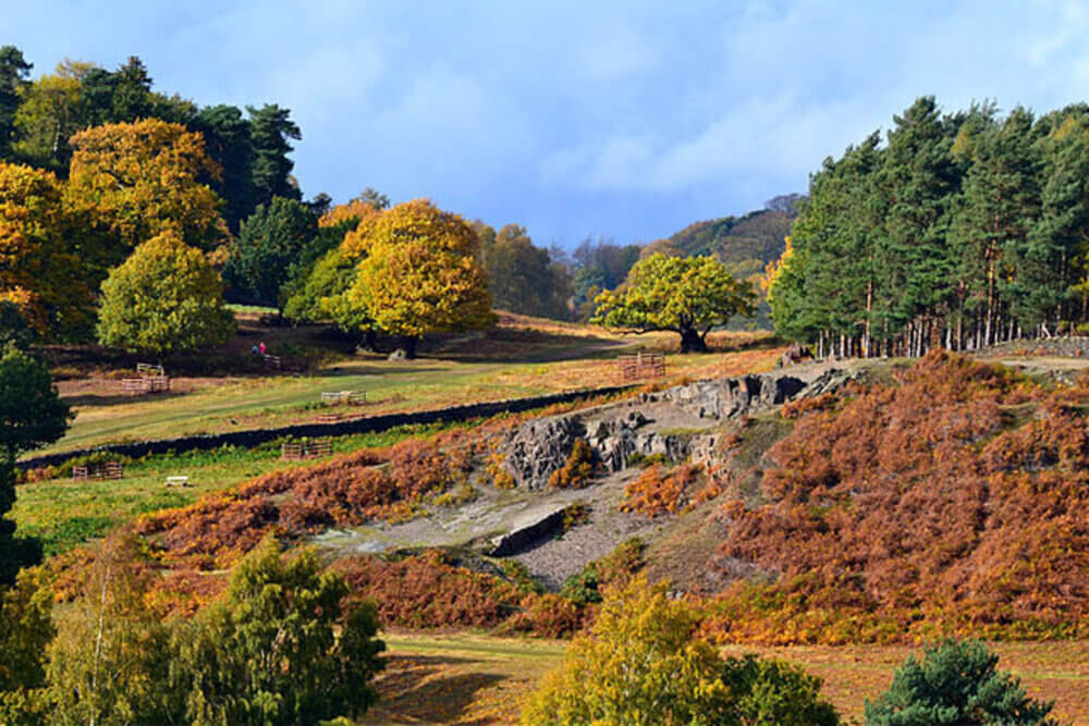 Bradgate Park in Leicester 11