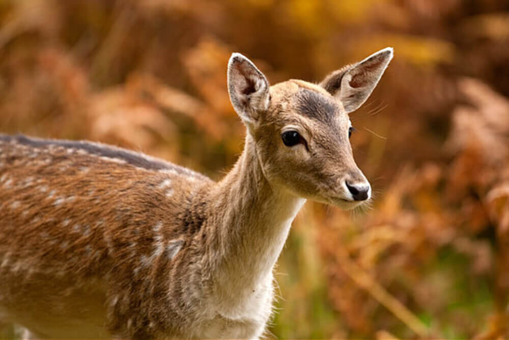 Bradgate Park in Leicester 4